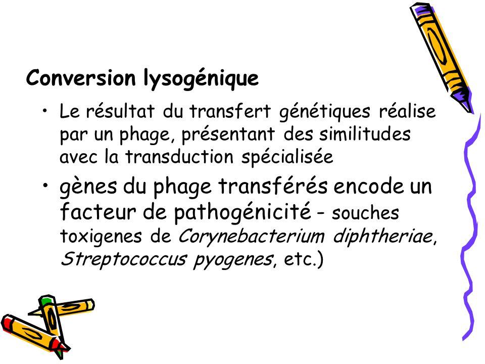 Conversion lysogénique Le résultat du transfert génétiques réalise par un phage, présentant des similitudes avec la transduction spécialisée gènes du phage transférés encode un facteur de pathogénicité - souches toxigenes de Corynebacterium diphtheriae, Streptococcus pyogenes, etc.)