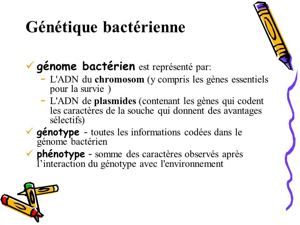 Génétique bactérienne génome bactérien est représenté par: - L ADN du chromosom (y compris les gènes essentiels pour la survie ) - L ADN de plasmides (contenant les gènes qui codent les caractères de la souche qui donnent des avantages sélectifs) génotype - toutes les informations codées dans le génome bactérien phénotype - somme des caractères observés après l'interaction du génotype avec l environnement