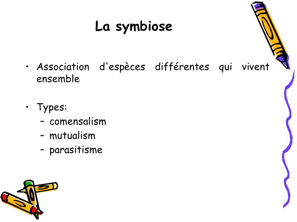 La symbiose Association d espèces différentes qui vivent ensemble Types: –comensalism –mutualism –parasitisme
