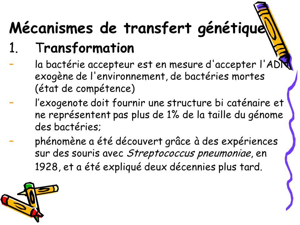 Mécanismes de transfert génétique 1.Transformation - la bactérie accepteur est en mesure d accepter l ADN exogène de l environnement, de bactéries mortes (état de compétence) - l'exogenote doit fournir une structure bi caténaire et ne représentent pas plus de 1% de la taille du génome des bactéries; - phénomène a été découvert grâce à des expériences sur des souris avec Streptococcus pneumoniae, en 1928, et a été expliqué deux décennies plus tard.