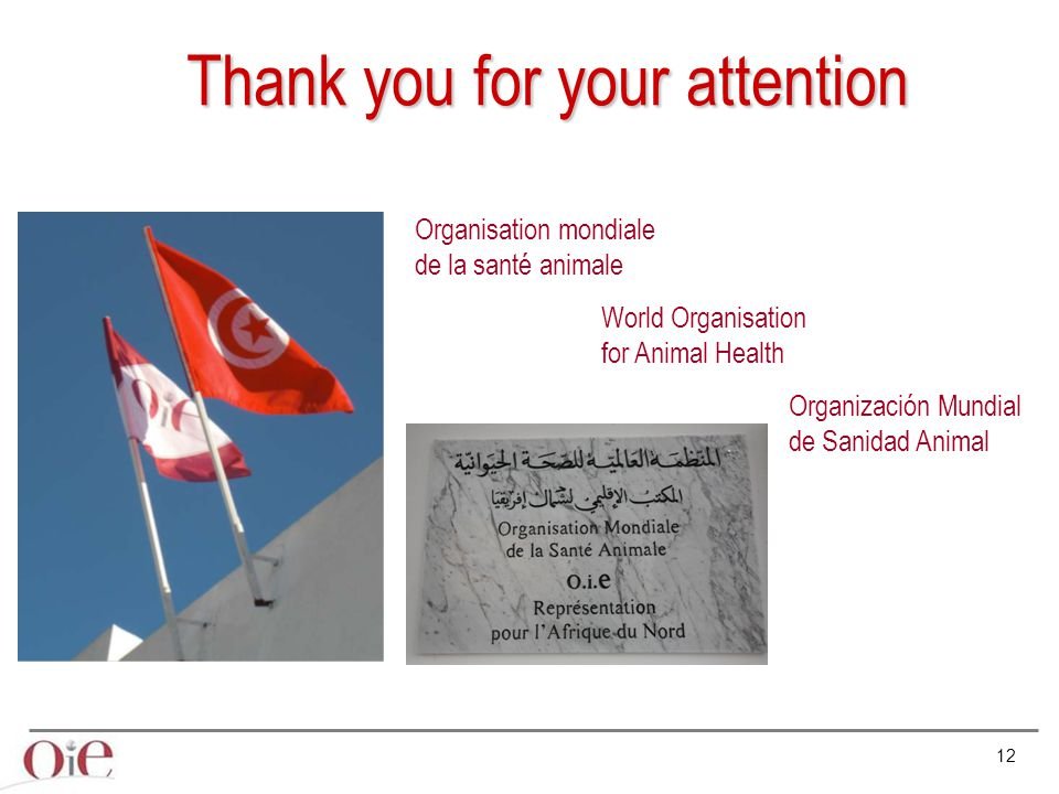 12 Organisation mondiale de la santé animale World Organisation for Animal Health Organización Mundial de Sanidad Animal Thank you for your attention