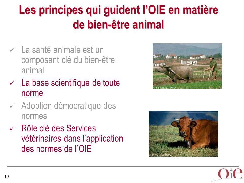 19 Les principes qui guident l'OIE en matière de bien-être animal La santé animale est un composant clé du bien-être animal La base scientifique de toute norme Adoption démocratique des normes Rôle clé des Services vétérinaires dans l'application des normes de l'OIE
