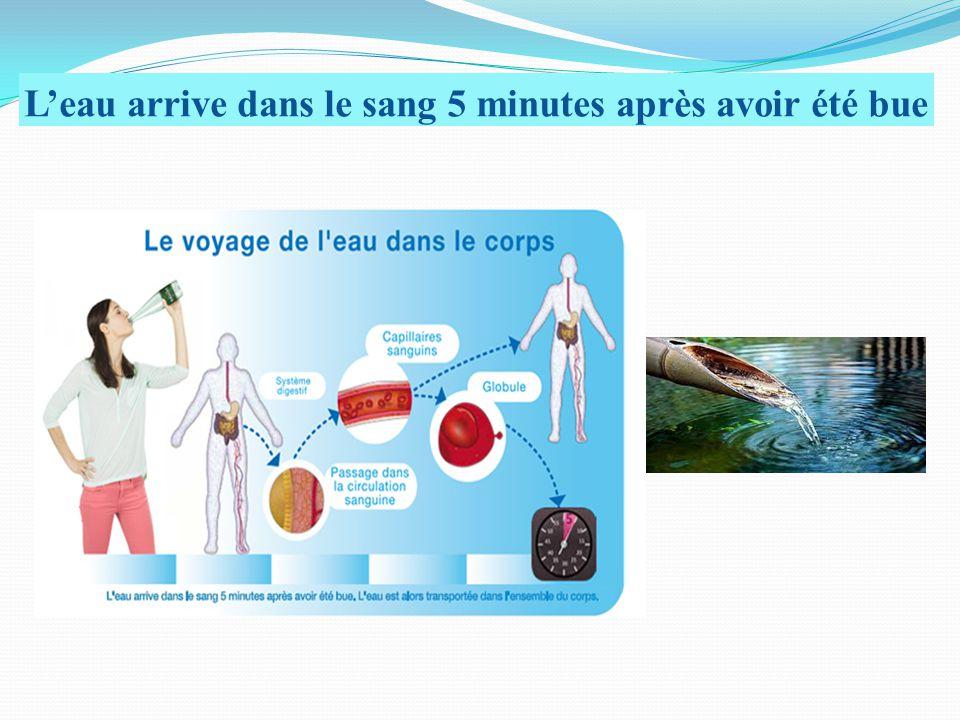 L'eau arrive dans le sang 5 minutes après avoir été bue