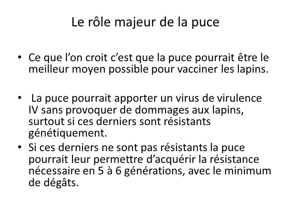 Le rôle majeur de la puce Ce que l'on croit c'est que la puce pourrait être le meilleur moyen possible pour vacciner les lapins. La puce pourrait appo
