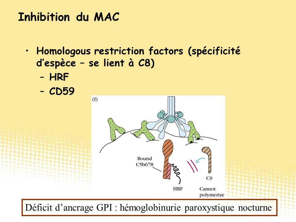 Homologous restriction factors (spécificité d'espèce – se lient à C8) –HRF –CD59 Inhibition du MAC Déficit d'ancrage GPI : hémoglobinurie paroxystique
