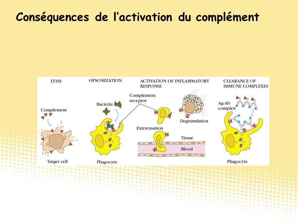 Conséquences de l'activation du complément