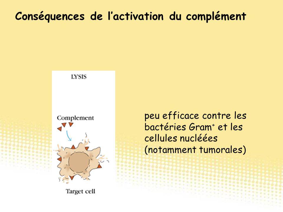 peu efficace contre les bactéries Gram + et les cellules nucléées (notamment tumorales) Conséquences de l'activation du complément