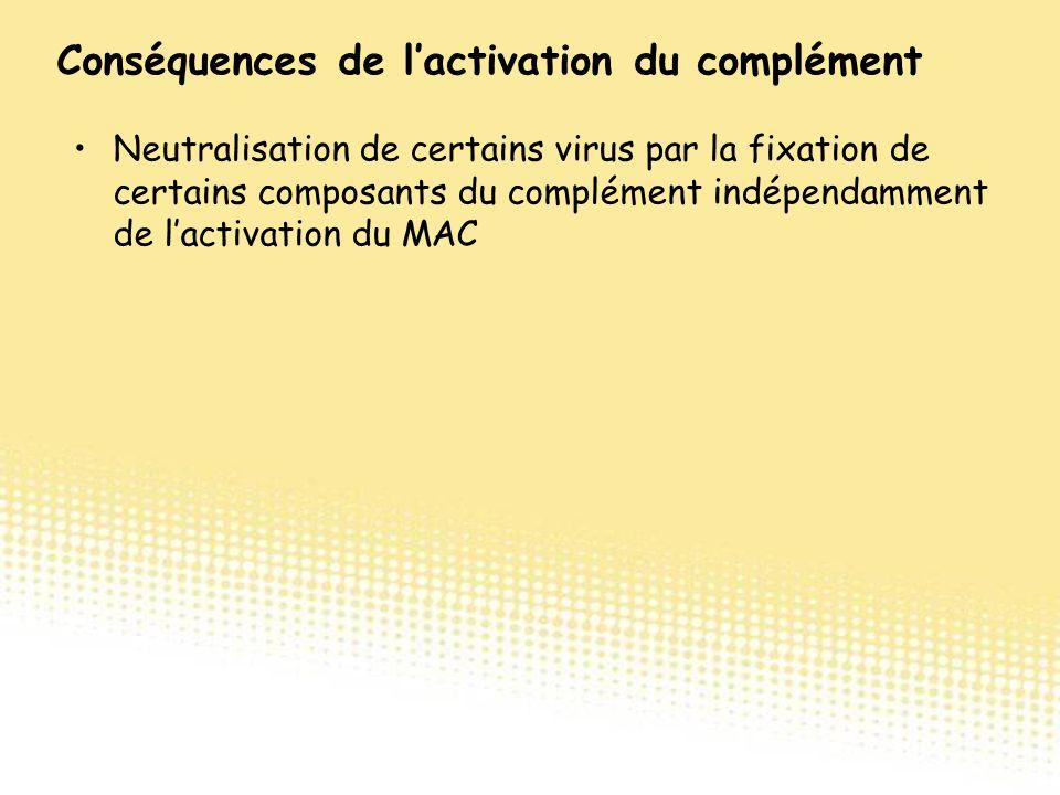 Neutralisation de certains virus par la fixation de certains composants du complément indépendamment de l'activation du MAC Conséquences de l'activati