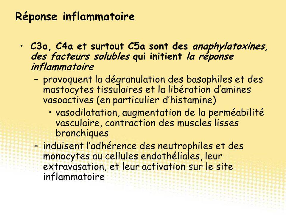 C3a, C4a et surtout C5a sont des anaphylatoxines, des facteurs solubles qui initient la réponse inflammatoire –provoquent la dégranulation des basophi