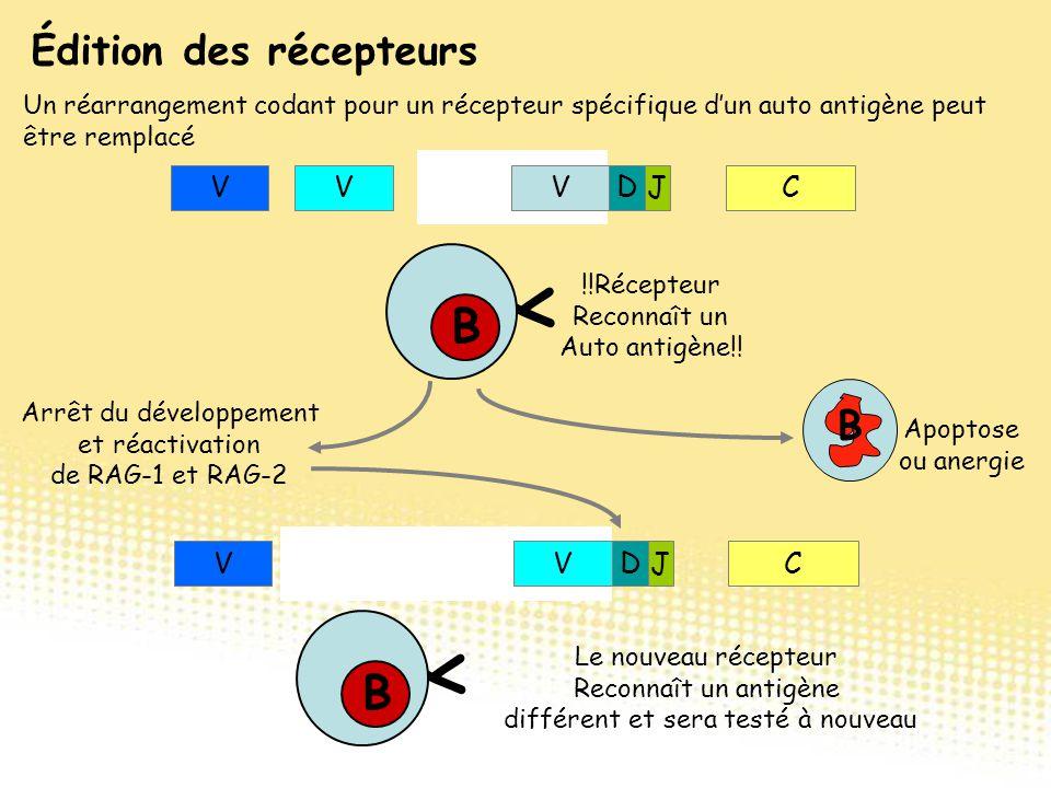 Édition des récepteurs Un réarrangement codant pour un récepteur spécifique d'un auto antigène peut être remplacé VCDJ VVV Y B B !!Récepteur Reconnaît