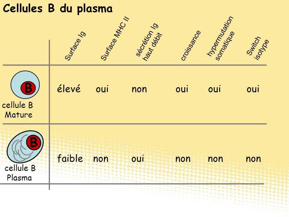 Cellules B du plasma Switch isotype B B cellule B Mature cellule B Plasma élevé oui non oui oui oui faiblenon oui non non non Surface Ig Surface MHC I