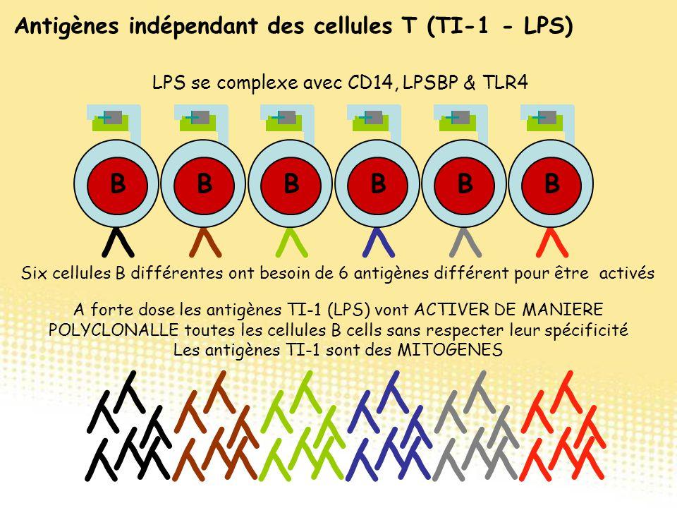 YYYYYY BBBBBB YYYYYY YYYYYY YYYYYY YYYYYY YYYYYY YYYYYY Six cellules B différentes ont besoin de 6 antigènes différent pour être activés A forte dose