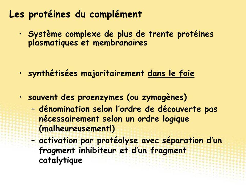 synthétisées majoritairement dans le foie souvent des proenzymes (ou zymogènes) –dénomination selon l'ordre de découverte pas nécessairement selon un