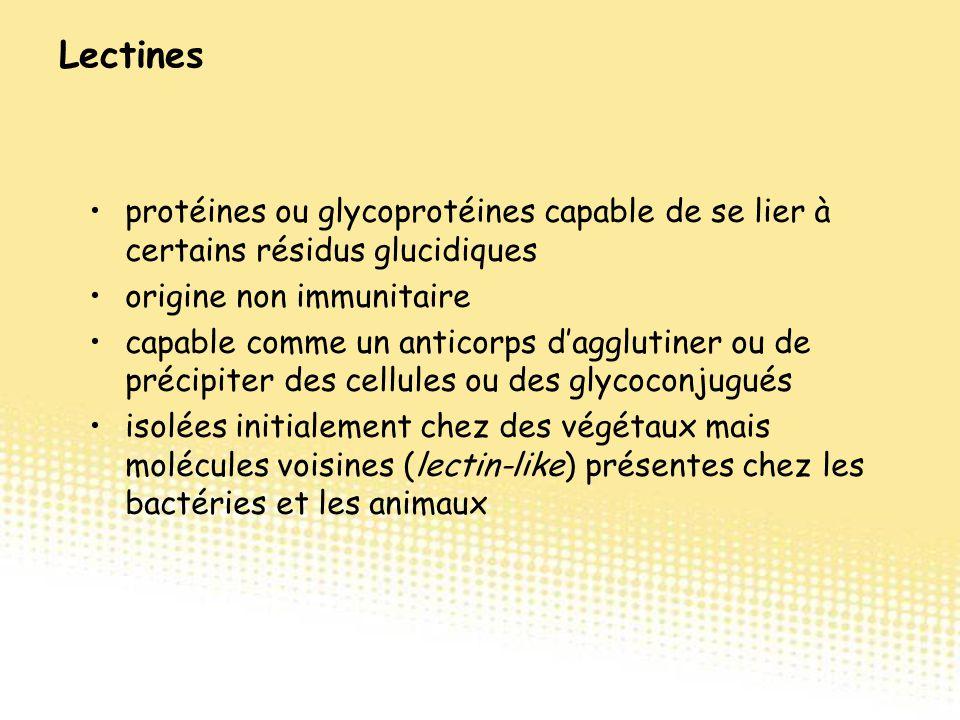 protéines ou glycoprotéines capable de se lier à certains résidus glucidiques origine non immunitaire capable comme un anticorps d'agglutiner ou de pr