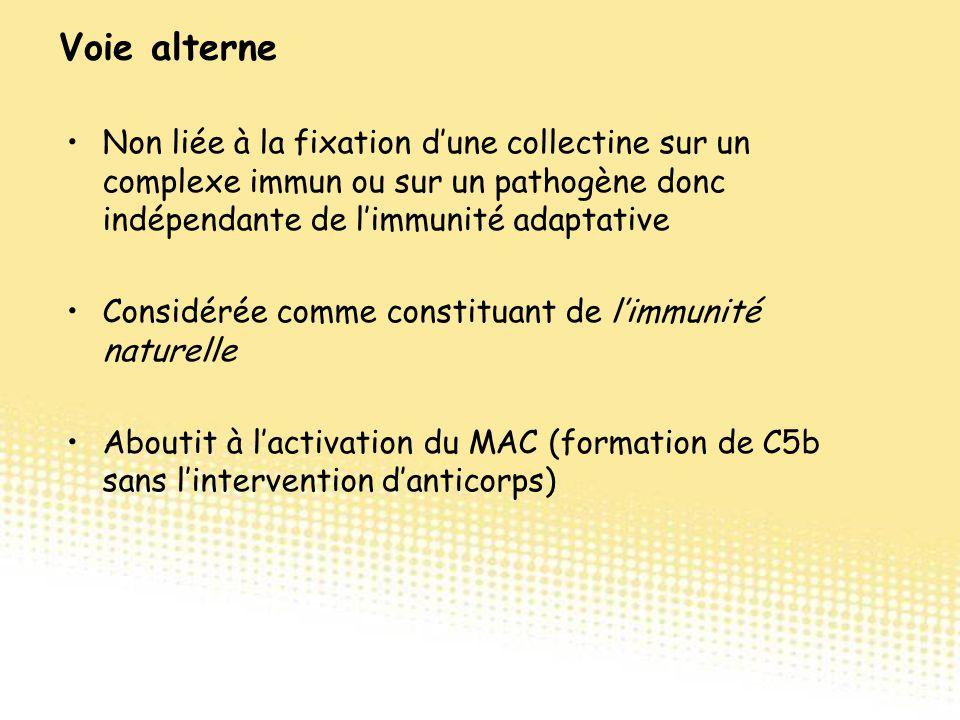 Non liée à la fixation d'une collectine sur un complexe immun ou sur un pathogène donc indépendante de l'immunité adaptative Considérée comme constitu
