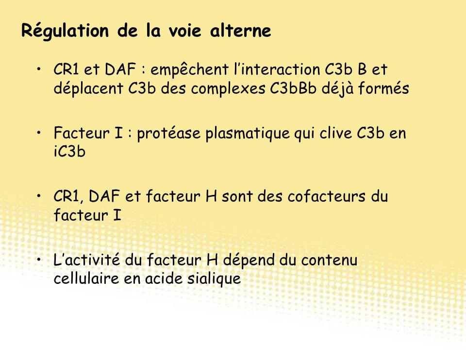 CR1 et DAF : empêchent l'interaction C3b B et déplacent C3b des complexes C3bBb déjà formés Facteur I : protéase plasmatique qui clive C3b en iC3b CR1