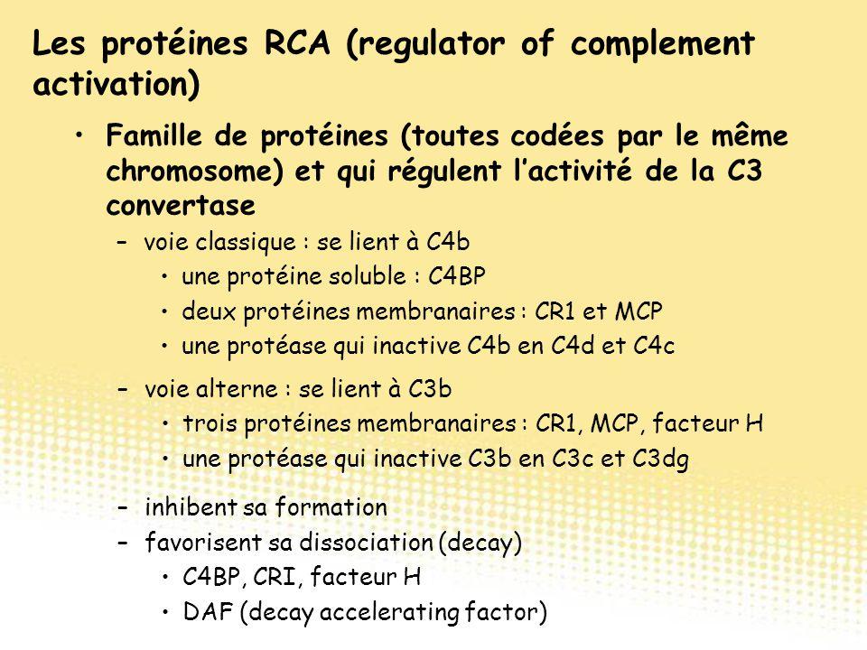 Famille de protéines (toutes codées par le même chromosome) et qui régulent l'activité de la C3 convertase –voie classique : se lient à C4b une protéi