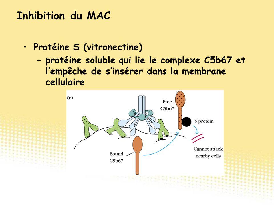 Protéine S (vitronectine) –protéine soluble qui lie le complexe C5b67 et l'empêche de s'insérer dans la membrane cellulaire Inhibition du MAC
