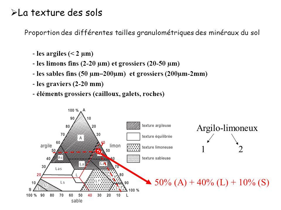 - les argiles (< 2 µm) - les limons fins (2-20 µm) et grossiers (20-50 µm) - les sables fins (50 µm–200µm) et grossiers (200µm-2mm) - les graviers (2-20 mm) - éléments grossiers (cailloux, galets, roches) Proportion des différentes tailles granulométriques des minéraux du sol  La texture des sols Argilo-limoneux 12 50% (A) + 40% (L) + 10% (S)
