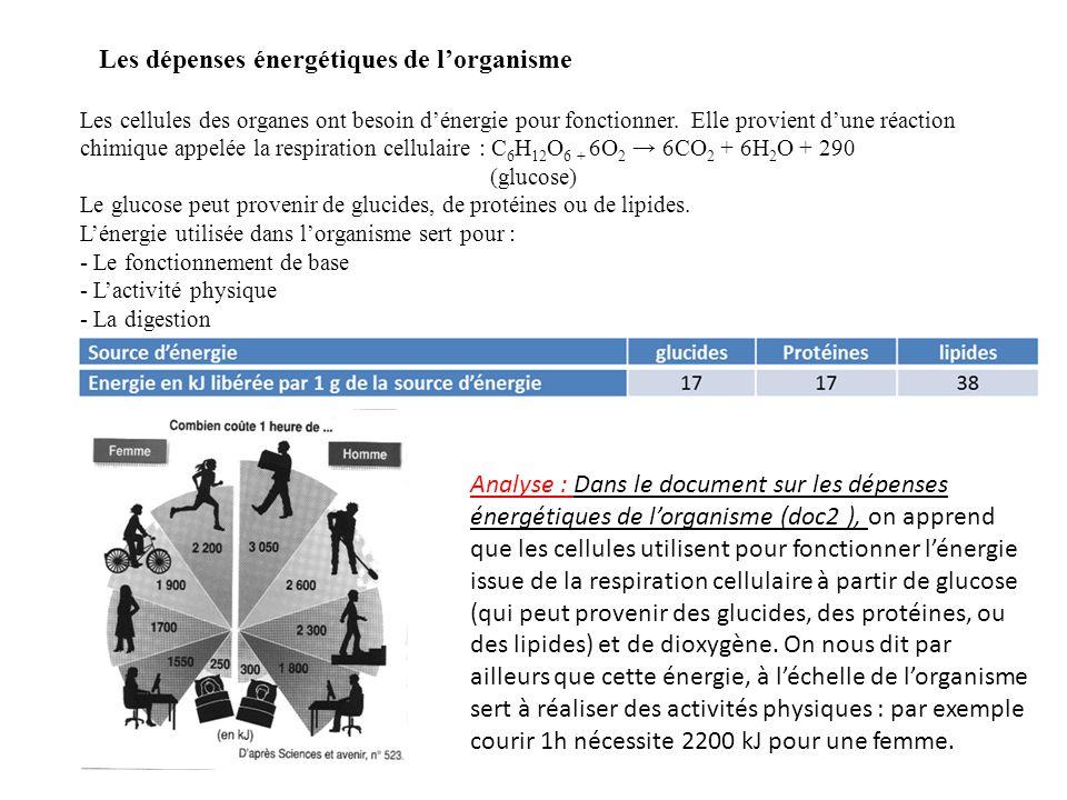 Puissance de l'effort en W Glucose utilisé en g/min Energie libérée en KJ 501,0917,5 1001,8830,00 1502,6642,5 2003,4455,00 2504,2267,5 Analyse : Dans le tableau, on constate que pour une puissance d'effort de 50 W, le glucose utilisé est de 1,09 g/min et l'énergie libérée de 17,5 kJ.