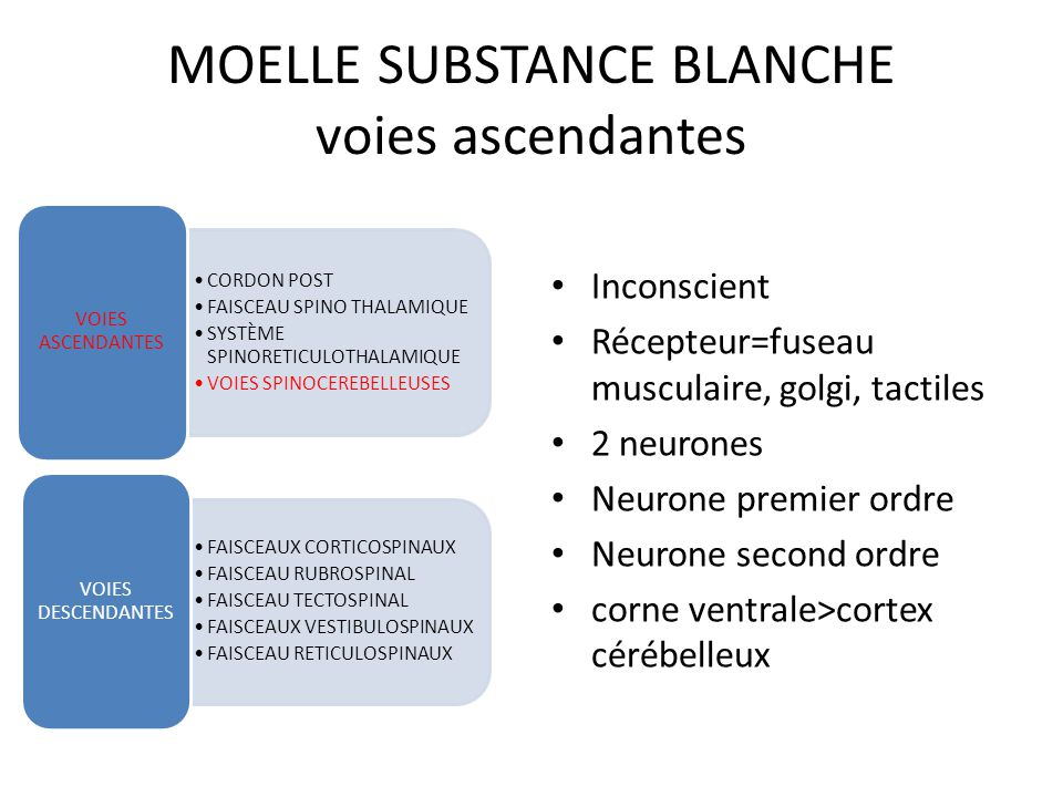 MOELLE SUBSTANCE BLANCHE voies ascendantes CORDON POST FAISCEAU SPINO THALAMIQUE SYSTÈME SPINORETICULOTHALAMIQUE VOIES SPINOCEREBELLEUSES VOIES ASCEND