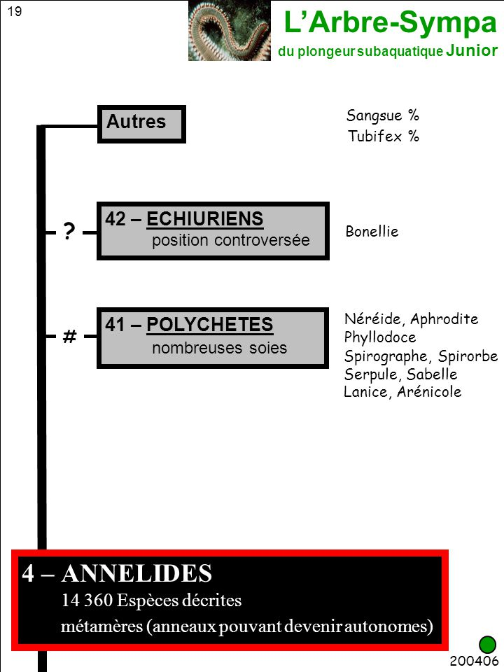 L'Arbre-Sympa du plongeur subaquatique Junior 19 4 – ANNELIDES 14 360 Espèces décrites métamères (anneaux pouvant devenir autonomes) Tubifex % Sangsue
