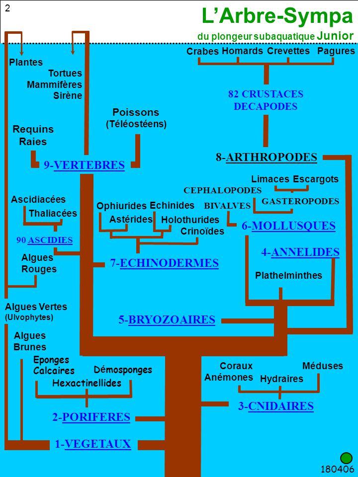L'Arbre-Sympa du plongeur subaquatique Junior 13 6-MOLLUSQUES Requins Raies 200406 90 ASCIDIES 7-ECHINODERMES 4-ANNELIDES 5-BRYOZOAIRES 3-CNIDAIRES 1-VEGETAUX 2-PORIFERES 8-ARTHROPODES Poissons (Téléostéens) MédusesCoraux Anémones 82 CRUSTACES DECAPODES Hydraires 9-VERTEBRES