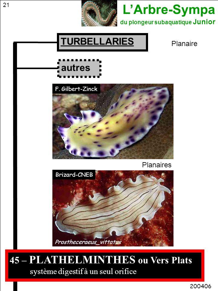 L'Arbre-Sympa du plongeur subaquatique Junior 21 45 – PLATHELMINTHES ou Vers Plats système digestif à un seul orifice TURBELLARIES Planaire 200406 aut