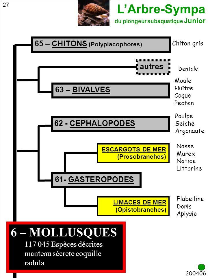 L'Arbre-Sympa du plongeur subaquatique Junior 27 63 – BIVALVES 6 – MOLLUSQUES 117 045 Espèces décrites manteau sécrète coquille radula 65 – CHITONS (P