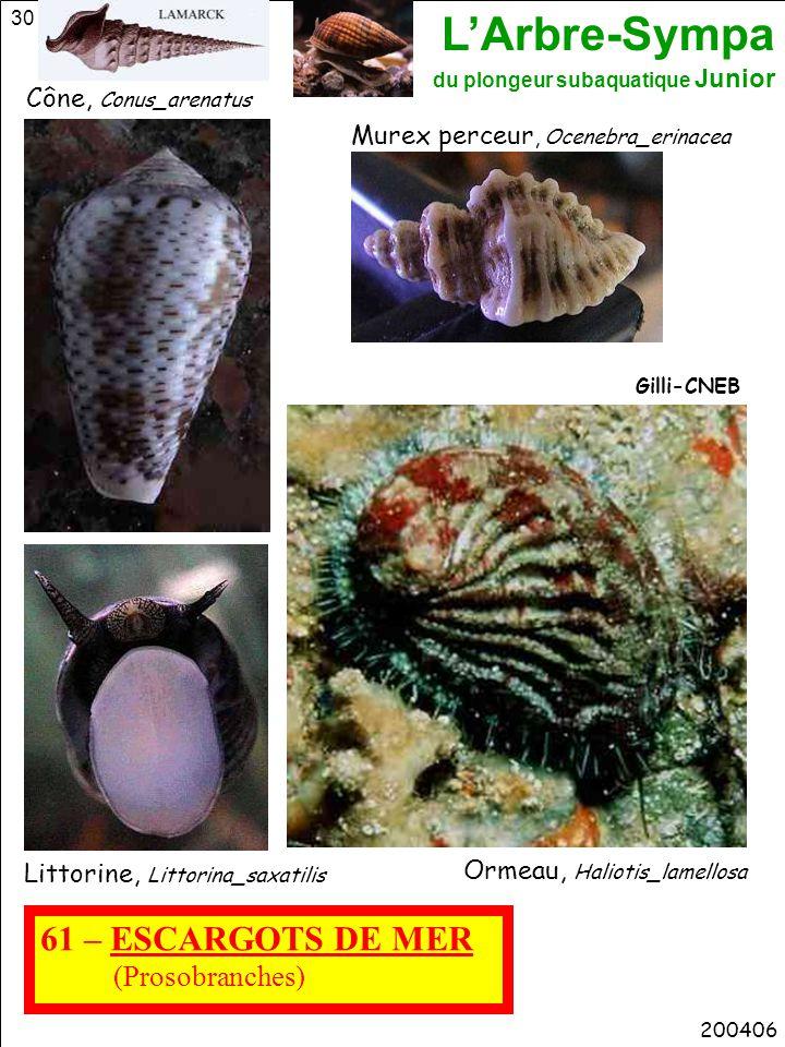 L'Arbre-Sympa du plongeur subaquatique Junior 30 61 – ESCARGOTS DE MER (Prosobranches) 200406 Littorine, Littorina_saxatilis Ormeau, Haliotis_lamellos