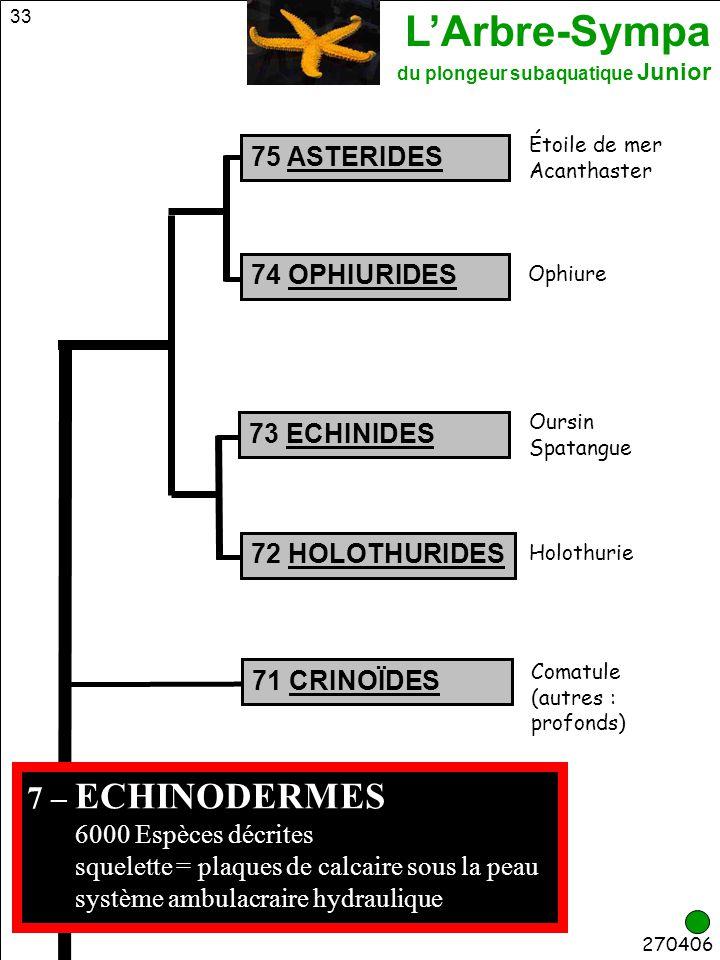 L'Arbre-Sympa du plongeur subaquatique Junior 33 Comatule (autres : profonds) 75 ASTERIDES 72 HOLOTHURIDES 74 OPHIURIDES Holothurie Oursin Spatangue O