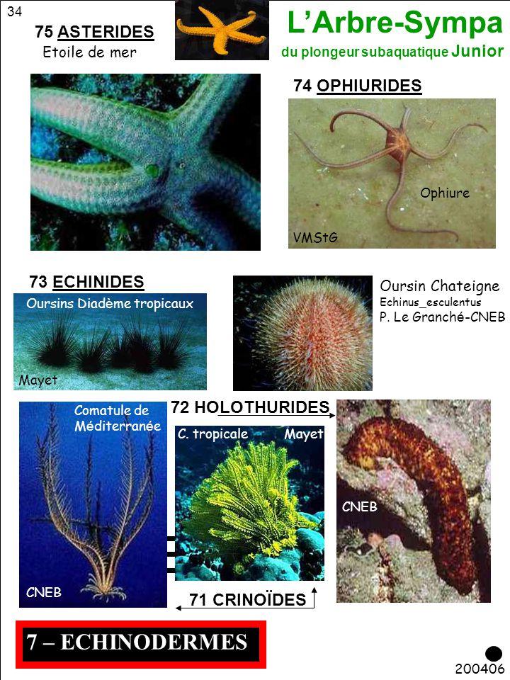 L'Arbre-Sympa du plongeur subaquatique Junior 34 7 – ECHINODERMES 200406 73 ECHINIDES Ophiure VMStG 74 OPHIURIDES 71 CRINOÏDES 72 HOLOTHURIDES CNEB Ou