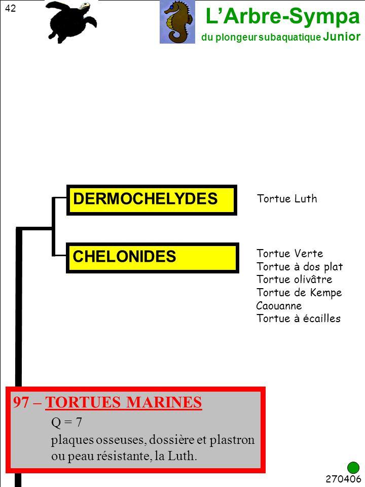 L'Arbre-Sympa du plongeur subaquatique Junior 42 270406 CHELONIDES Tortue Verte Tortue à dos plat Tortue olivâtre Tortue de Kempe Caouanne Tortue à é