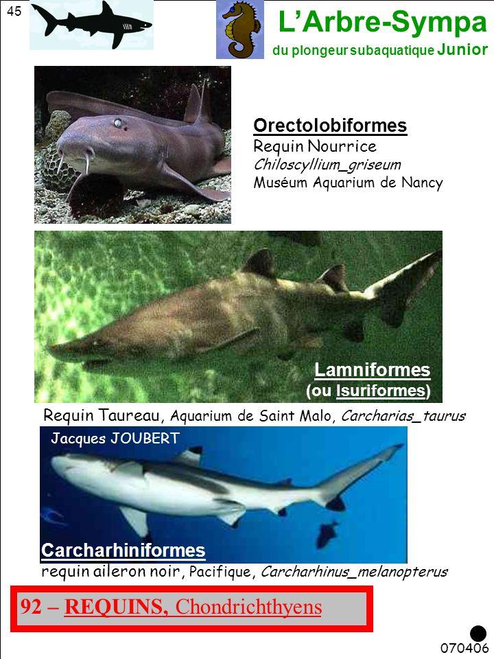 L'Arbre-Sympa du plongeur subaquatique Junior 45 070406 92 – REQUINS, Chondrichthyens Lamniformes (ou Isuriformes) Jacques JOUBERT Carcharhiniformes r