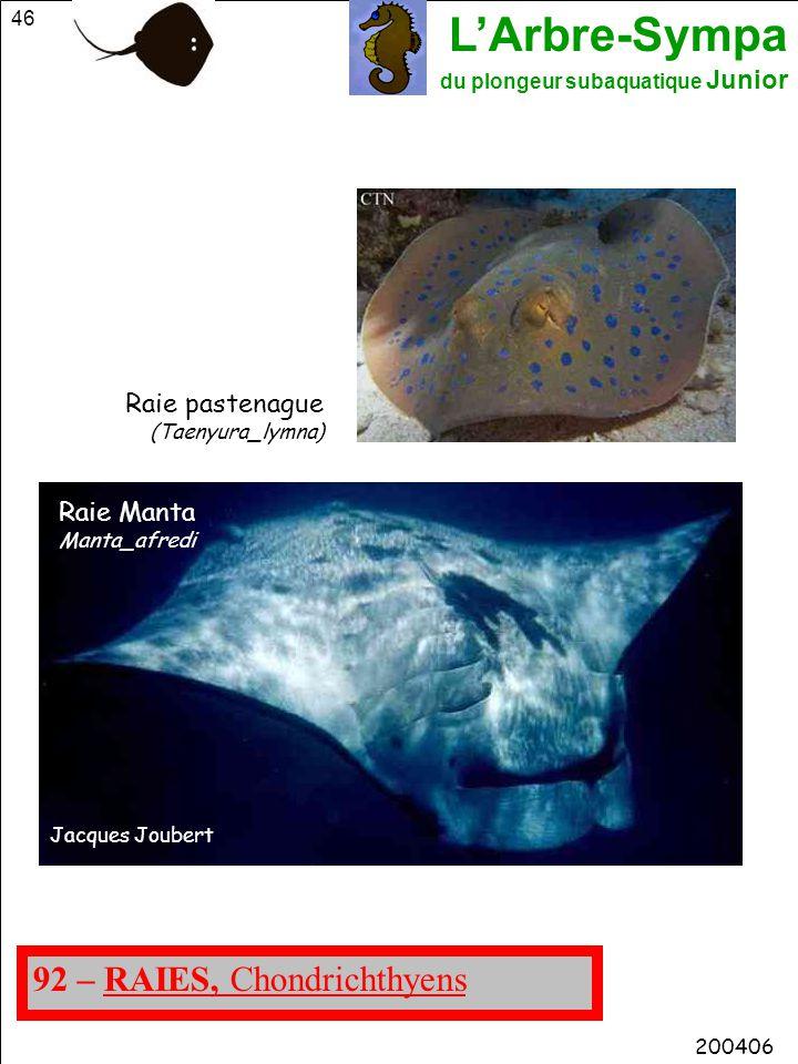 L'Arbre-Sympa du plongeur subaquatique Junior 46 200406 92 – RAIES, Chondrichthyens Raie pastenague (Taenyura_lymna) Raie Manta Manta_afredi Jacques J