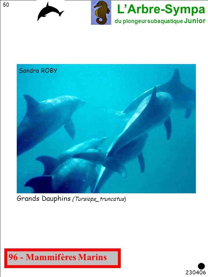 L'Arbre-Sympa du plongeur subaquatique Junior 50 96 - Mammifères Marins Grands Dauphins (Tursiops_truncatus) Sandra ROBY 230406