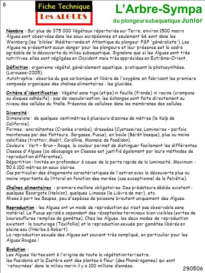 L'Arbre-Sympa du plongeur subaquatique Junior 27 63 – BIVALVES 6 – MOLLUSQUES 117 045 Espèces décrites manteau sécrète coquille radula 65 – CHITONS (Polyplacophores) Chiton gris Nasse Murex Natice Littorine Flabelline Doris Aplysie 200406 Moule Hu î tre Coque Pecten LIMACES DE MER (Opistobranches) Poulpe Seiche Argonaute 62 - CEPHALOPODES ESCARGOTS DE MER (Prosobranches) 61- GASTEROPODES Dentale autres