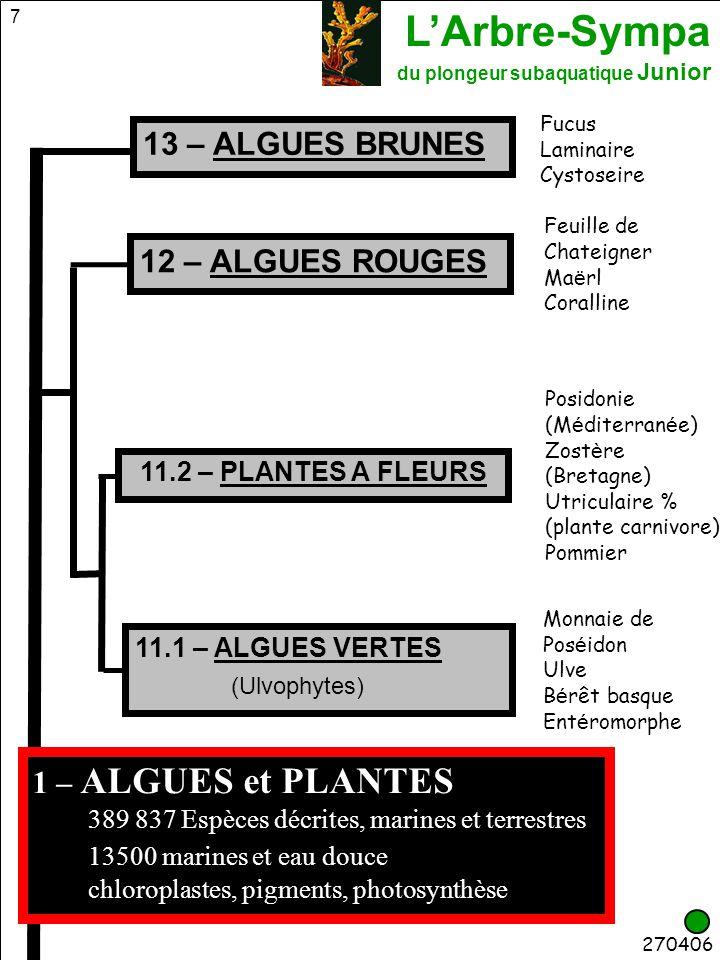 L'Arbre-Sympa du plongeur subaquatique Junior 8 200406 1 – ALGUES et PLANTES 11.2 PLANTES A FLEURS Posidonie Dune-CNEB Posidonia_oceanica 13 ALGUES BRUNES Fucus vésiculeux II Fucus_vesiculosus 11.1 ALGUES VERTES (Ulvophytes) Monnaie de Poséidon Maniette-CNEB 12 ALGUES ROUGES Peyssonnelia Gilli-CNEBPessonneylia_squamaria Halimeda_tuna