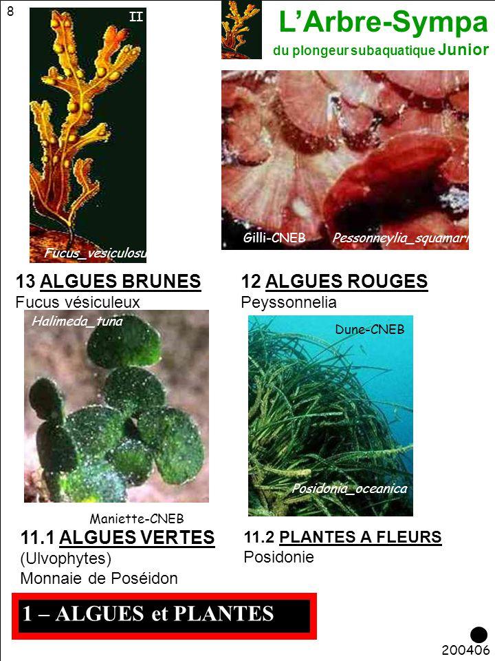 L'Arbre-Sympa du plongeur subaquatique Junior 39 Requins 210406 90 ASCIDIES 7-ECHINODERMES 4-ANNELIDES 5-BRYOZOAIRES 3-CNIDAIRES 1-VEGETAUX 2-PORIFERES 82 CRUSTACES DECAPODES 8-ARTHROPODES 6-MOLLUSQUES Tortues Mammifères Sirène Raies Poissons (Téléostéens) 9-VERTEBRES