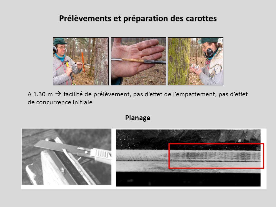 Prélèvements et préparation des carottes A 1.30 m  facilité de prélèvement, pas d'effet de l'empattement, pas d'effet de concurrence initiale Planage