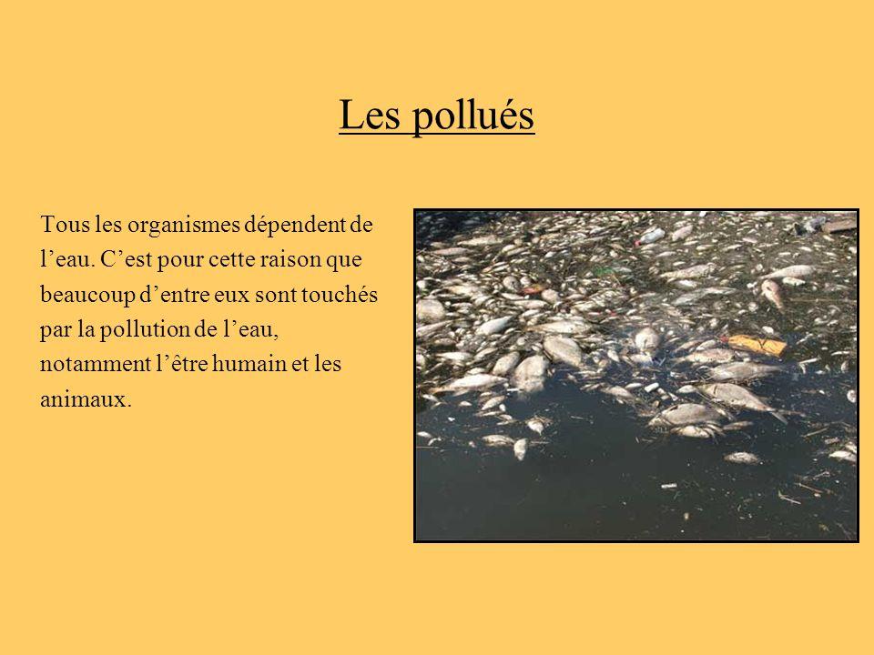 Les pollués Tous les organismes dépendent de l'eau. C'est pour cette raison que beaucoup d'entre eux sont touchés par la pollution de l'eau, notamment