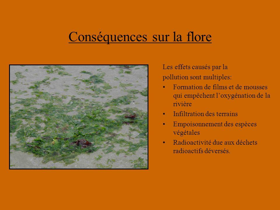 Conséquences sur la flore Les effets causés par la pollution sont multiples: Formation de films et de mousses qui empêchent l'oxygénation de la rivièr
