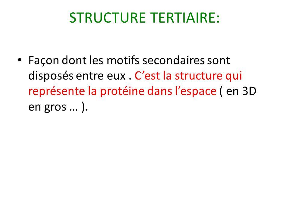 STRUCTURE TERTIAIRE: Façon dont les motifs secondaires sont disposés entre eux. C'est la structure qui représente la protéine dans l'espace ( en 3D en