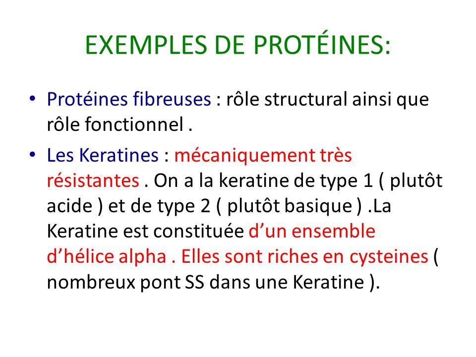 EXEMPLES DE PROTÉINES: Protéines fibreuses : rôle structural ainsi que rôle fonctionnel. Les Keratines : mécaniquement très résistantes. On a la kerat