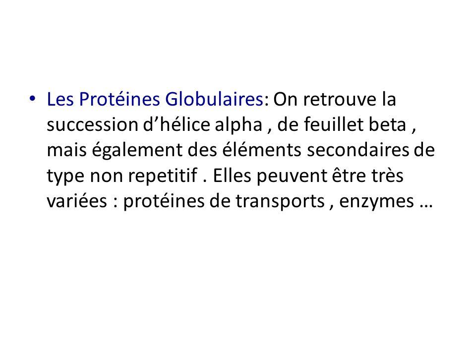 Les Protéines Globulaires: On retrouve la succession d'hélice alpha, de feuillet beta, mais également des éléments secondaires de type non repetitif.