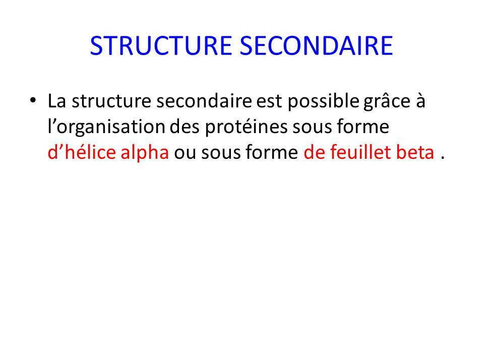 STRUCTURE SECONDAIRE La structure secondaire est possible grâce à l'organisation des protéines sous forme d'hélice alpha ou sous forme de feuillet beta.
