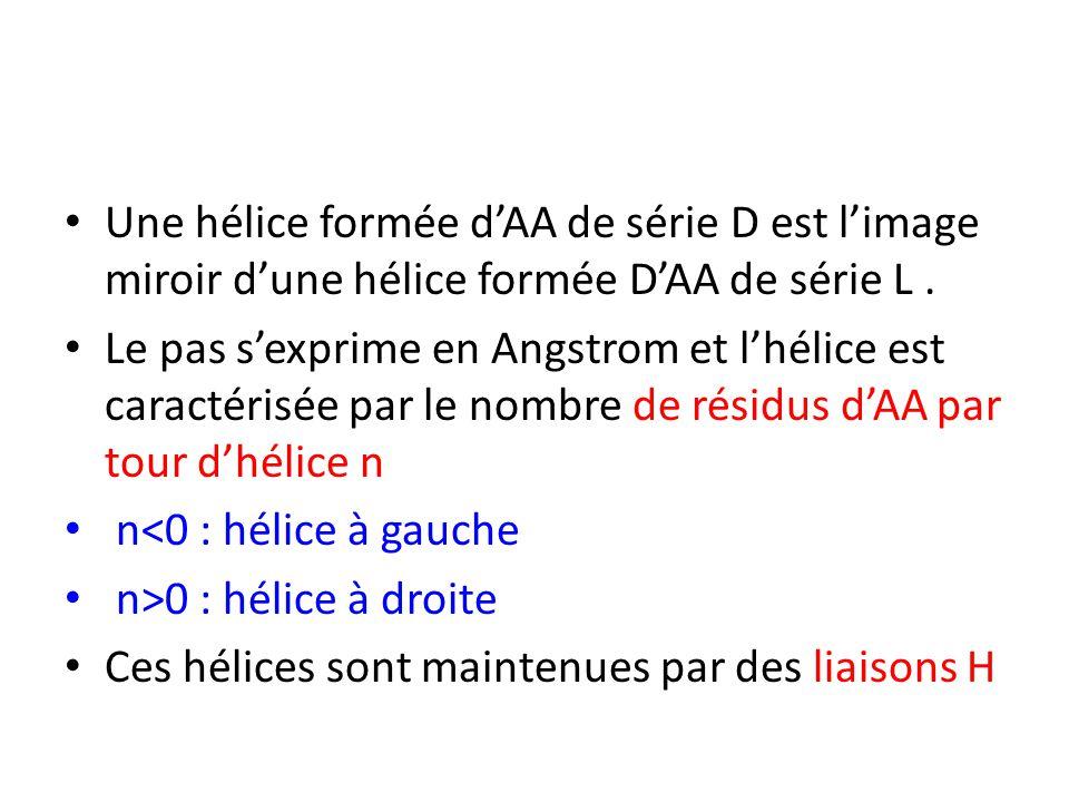 Une hélice formée d'AA de série D est l'image miroir d'une hélice formée D'AA de série L. Le pas s'exprime en Angstrom et l'hélice est caractérisée pa