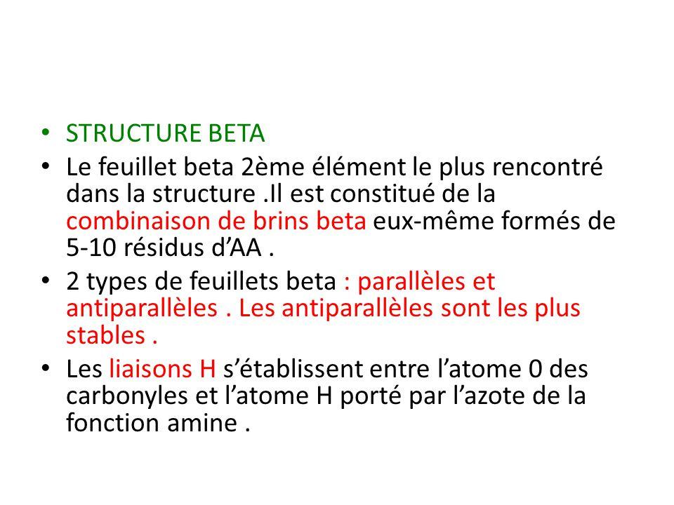 STRUCTURE BETA Le feuillet beta 2ème élément le plus rencontré dans la structure.Il est constitué de la combinaison de brins beta eux-même formés de 5-10 résidus d'AA.