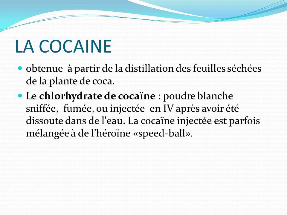 LA COCAINE obtenue à partir de la distillation des feuilles séchées de la plante de coca. Le chlorhydrate de cocaïne : poudre blanche sniffée, fumée,