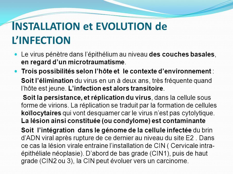 I NSTALLATION et EVOLUTION de L'INFECTION Le virus pénètre dans l'épithélium au niveau des couches basales, en regard d'un microtraumatisme. Trois pos